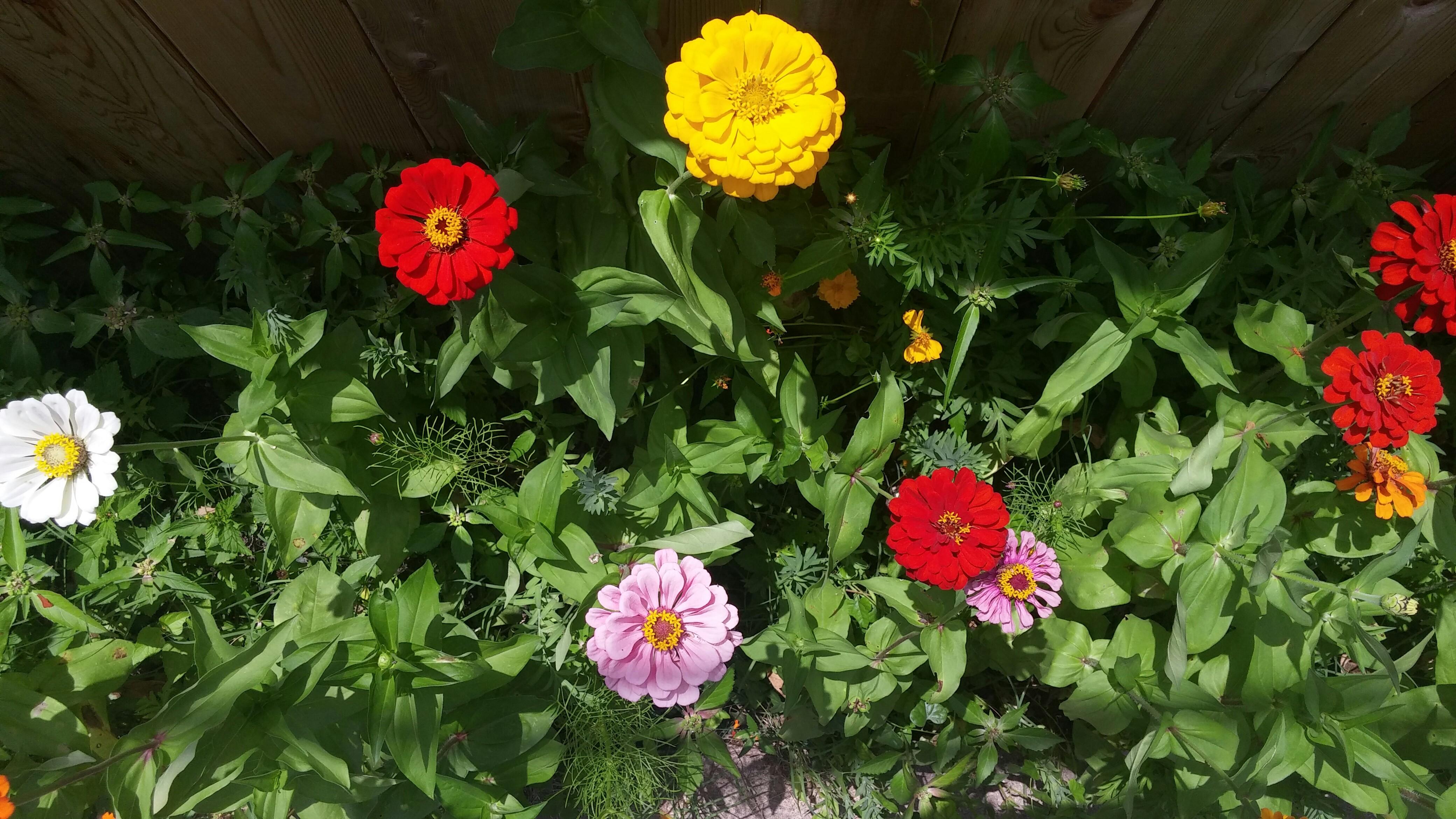 Flowers for Orlando